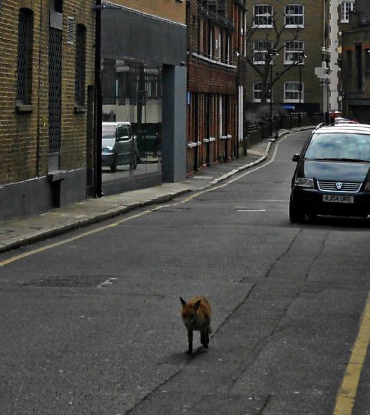 Flickr Duncan~ Fox Trot